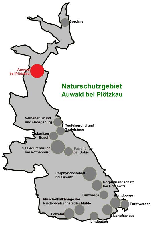 NSG Auwald bei Plötzkau