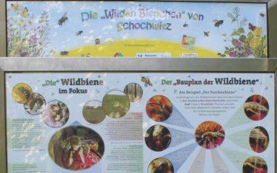 Eine Wildbienenwand für die Naturwerkstatt in Schochwitz